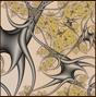 fractals9